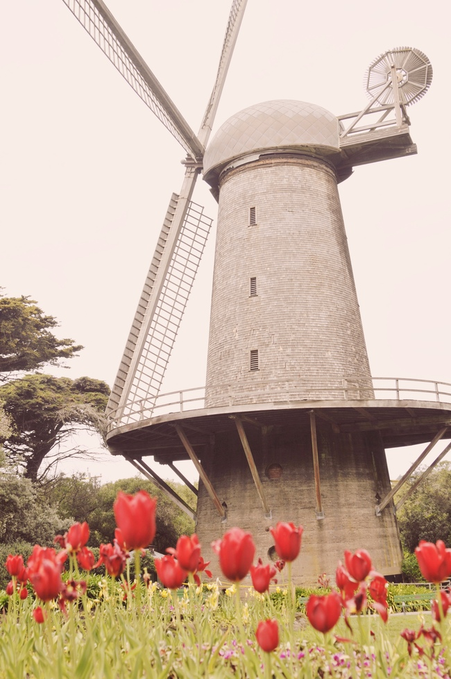 free things to do in San Francisco windmill and tulip garden