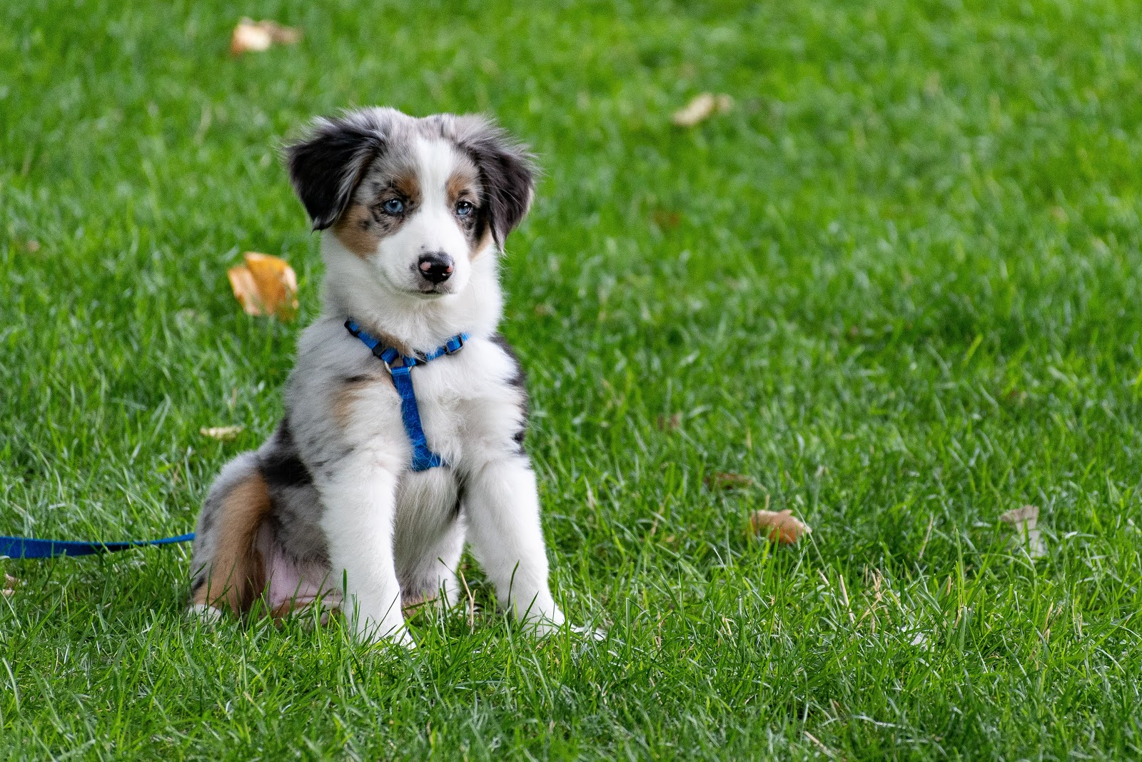 puppy-on-grass-field-dog-pictures