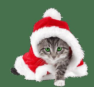 Gatos y perros con gorro papa noel - Image de chat de noel ...