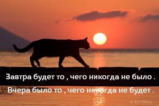 Блог Кота Моти  - Страница 2 EohGRguW8AArrnO