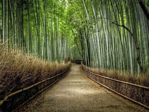 jalan bambu,hutan bambu,memukau,pemandangan,alam