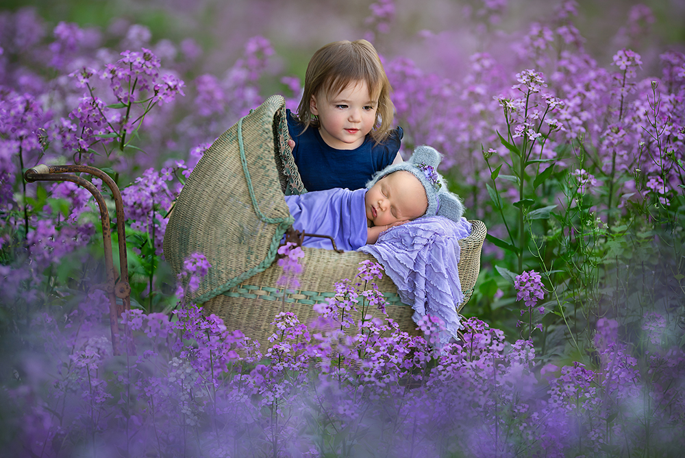 Newborn photos in wildflowers with sibling DeKalb, IL Geneva, IL photographer
