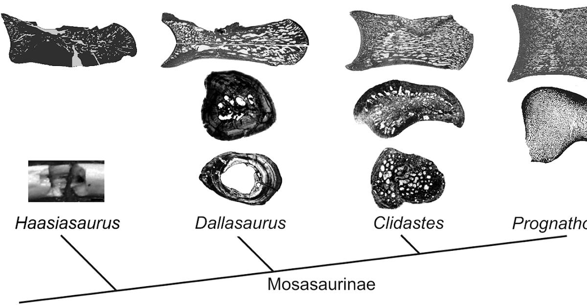 The Dragon's Tales: Bone Histology Hints at Mosasaur