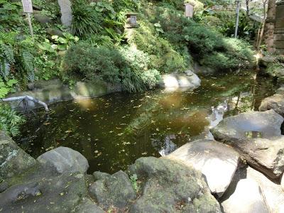 江の島無熱池