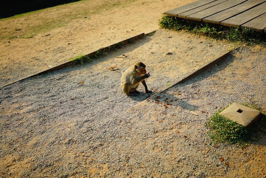 Angkor VIP tour, Angkor Wat