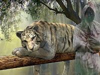 Cerita Mistis Misteri Penampakan Hantu Dan Harimau Putih Di Keramat Makam Ki Ageng Banjarsari