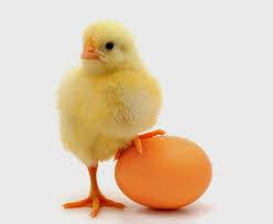 Ayam atau telur yang lebih dulu ada