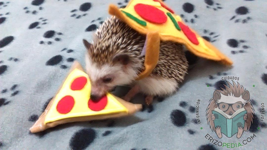 Erizo de tierra disfrazado de pizza comiendo una pizza