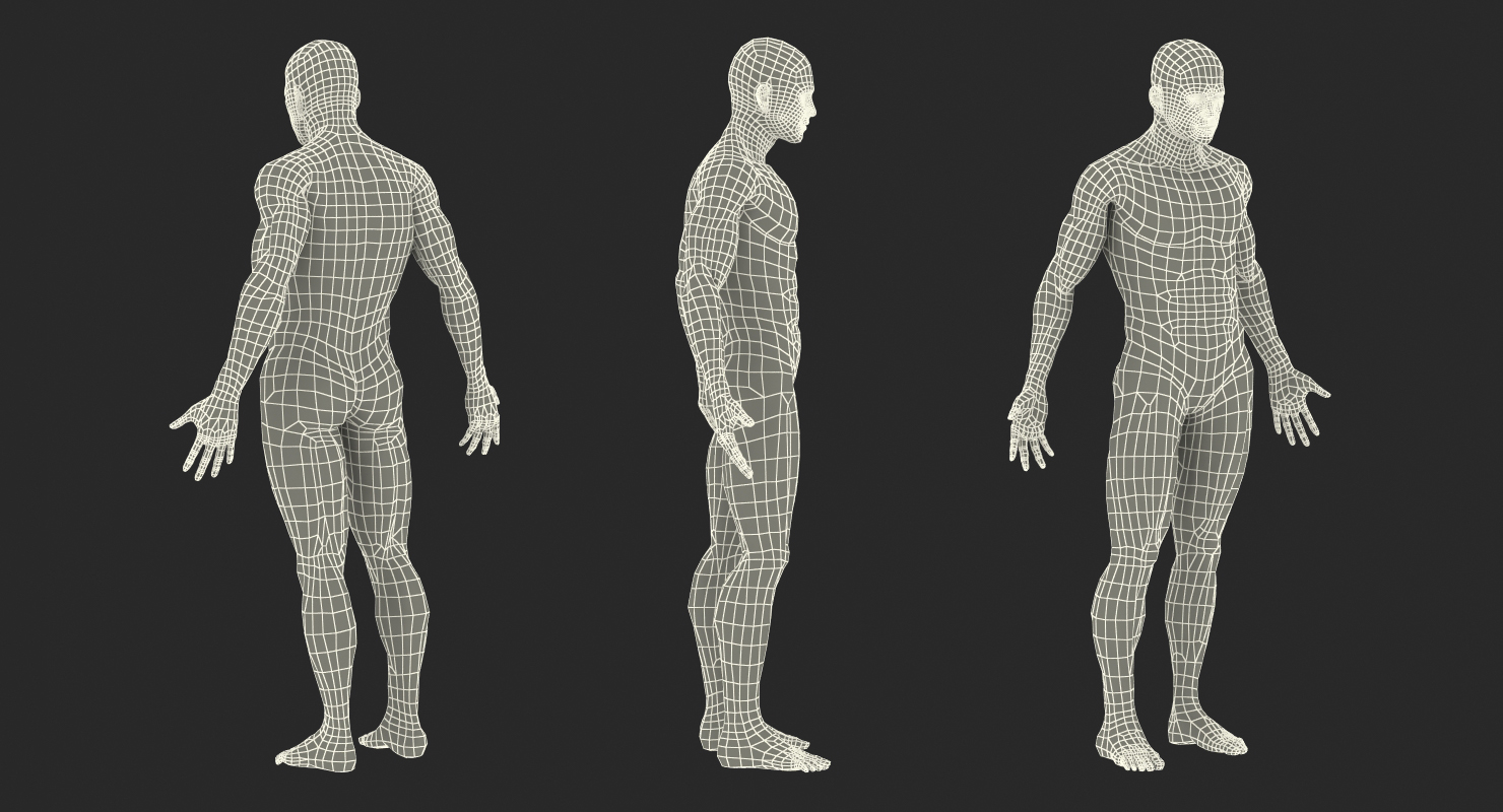 Male Anatomy Muscular System 3D model | 3d models for professionals
