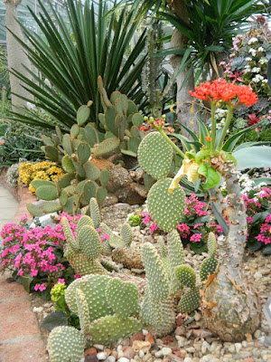 Cacti at Etobicoke's Centennial Park Conservatory  by garden muses-not another Toronto gardening blog