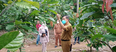 Pemprov Lampung Bantu Petani Kakao
