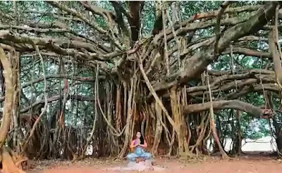 Under the Banyan Tree is an enchanting collection from India's foremost storyteller R. K. Narayan