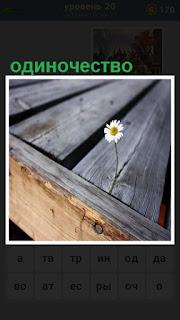 сквозь доски растет одинокая ромашка и стоит в одиночестве