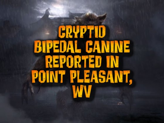 Cryptid Bipedal Canine Reported in Point Pleasant, WV