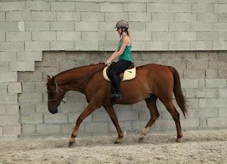 Equitation sans mors et photo, démonstration de monte en licol éthologique. Travail de dressage en licol éthologique.