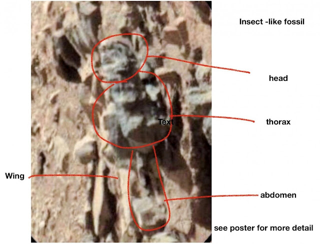 Entomologist claims photos show evidence of life on Mars