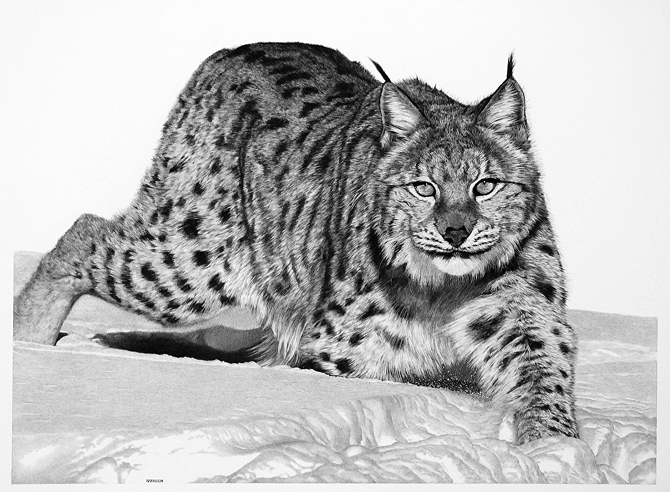 04-Hunter-in-the-Snow-Links-William-Bill-Harrison-Majestic-Wildlife-Carbon-Pencil-Drawings-www-designstack-co