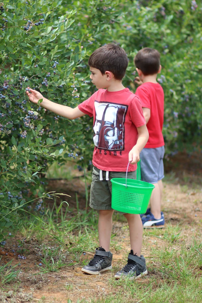 family activities- blueberry picking