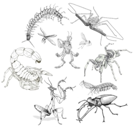 Crab Swarm Dnd
