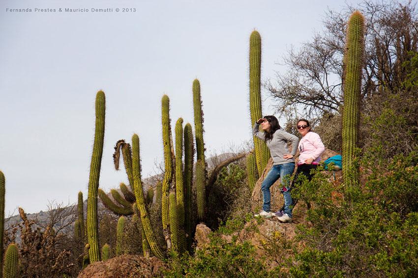 cactus Los Andes