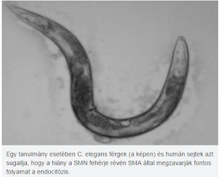fehérje parazita