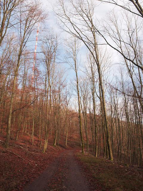 Waldweg unterhalb des Bielsteins. Links der Sendemast.