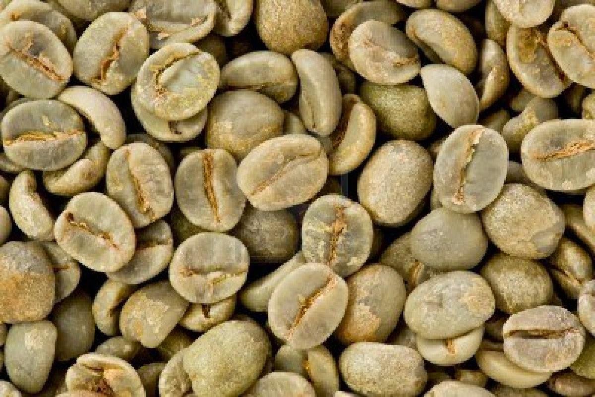 estratto di chicco di caffè verde kmarte