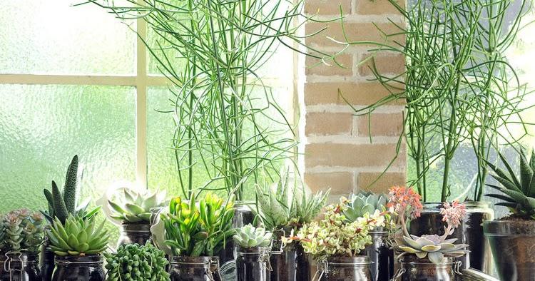 Les plantes vertes du moment caract rielle for Toutes les plantes vertes