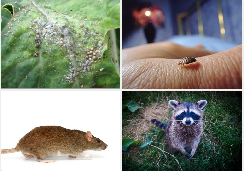 Worst Household Pests In The United States