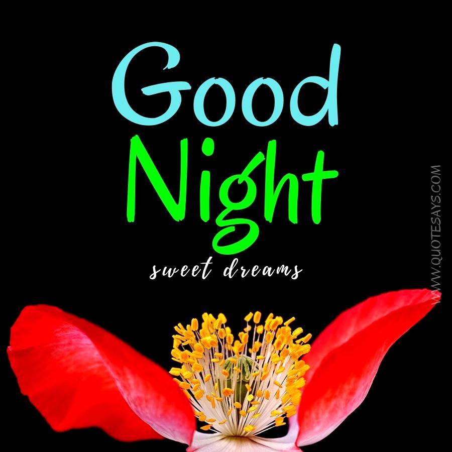 Good Night Red Flower