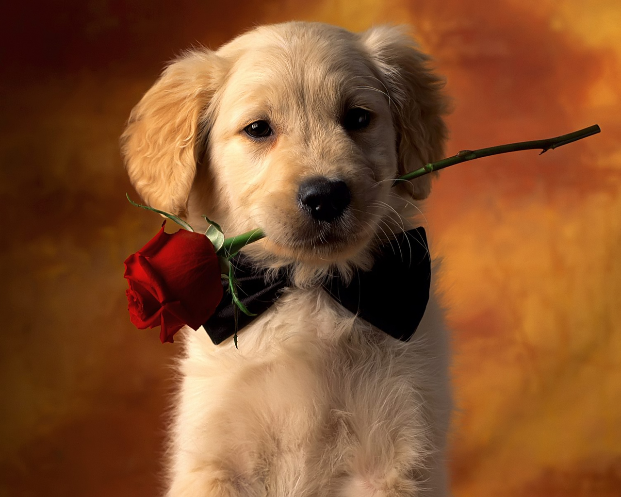 Dog and Red Rose Flower Dog Wallpapers Backgrounds | Dogs Wallpapers Backgrounds