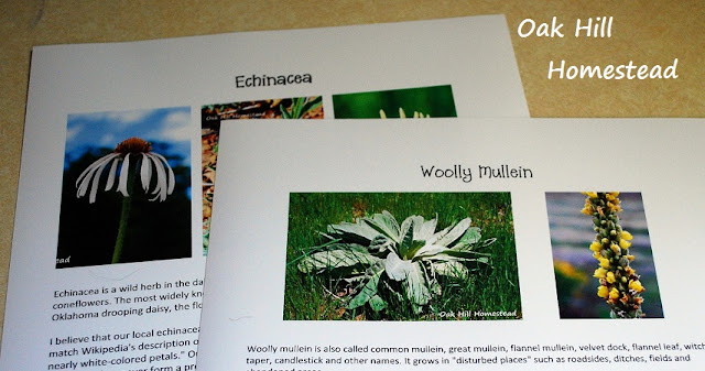 Make your own field guide of edibles, medicinal plants and wildflowers.