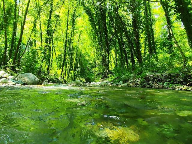 Alberi e torrente
