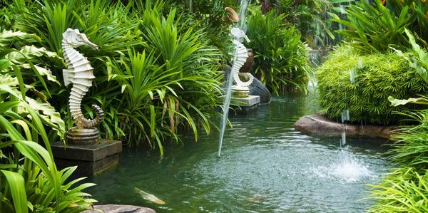Tips Membuat Taman Air untuk Rumah Minimalis