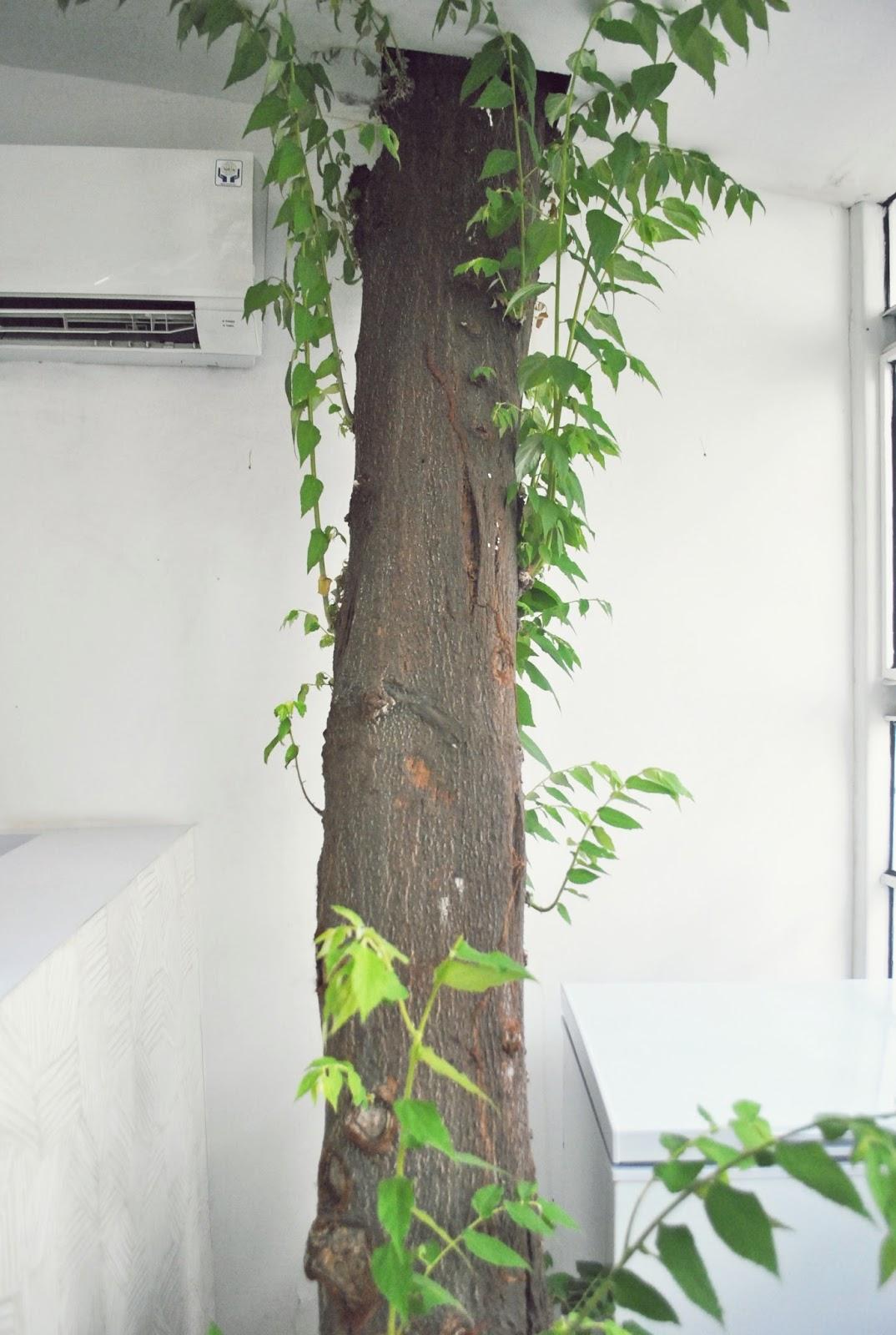 Onder de Boom - Dharmawangsa : Jual Gelato di Bawah Pohon - Pohon
