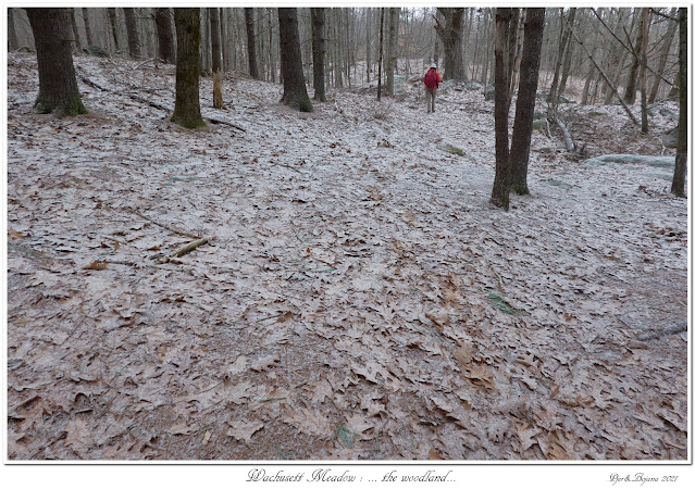Wachusett Meadow: ... the woodland...