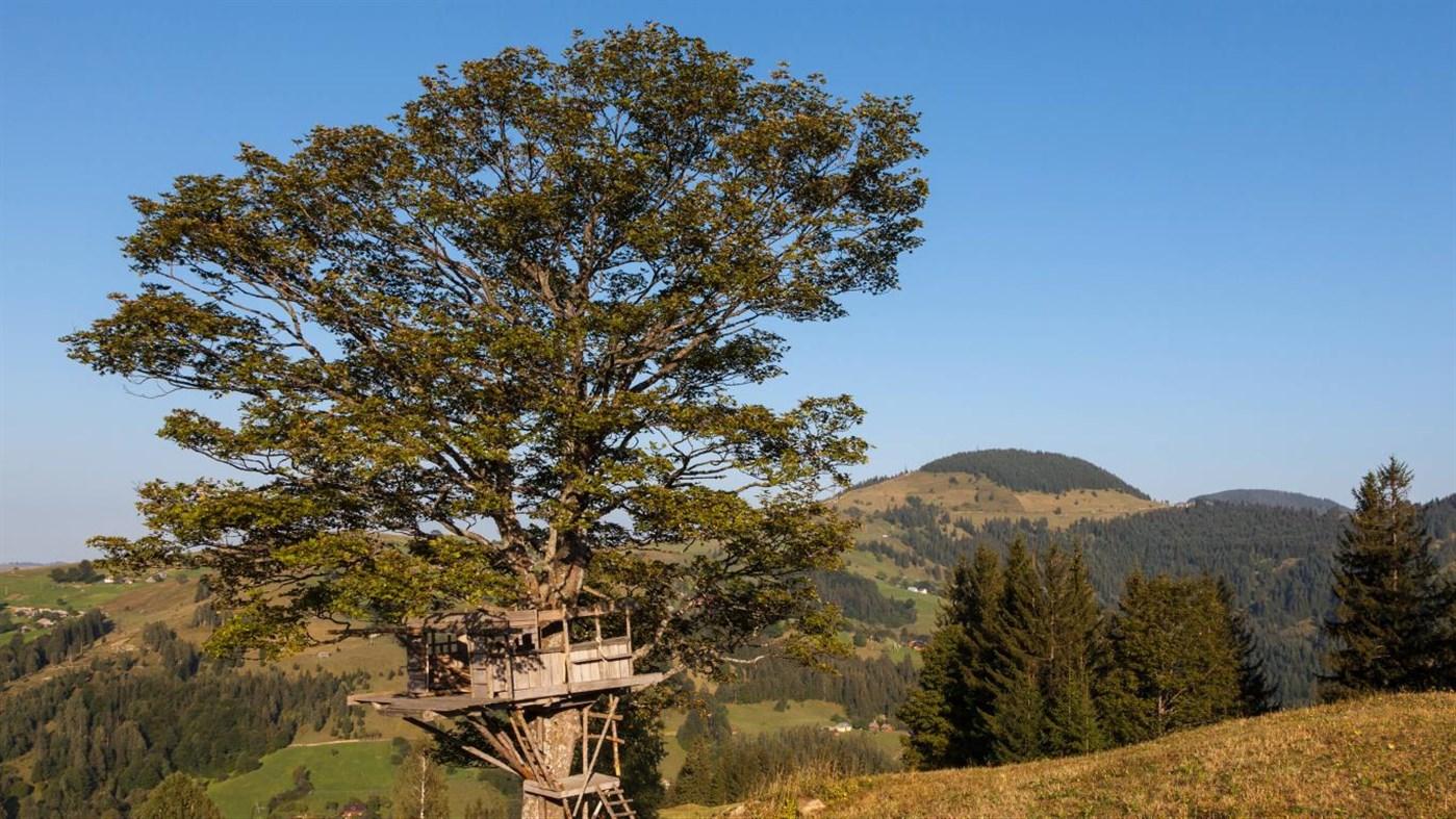 Download Treehouses PREMIUM, Tema per Windows 10