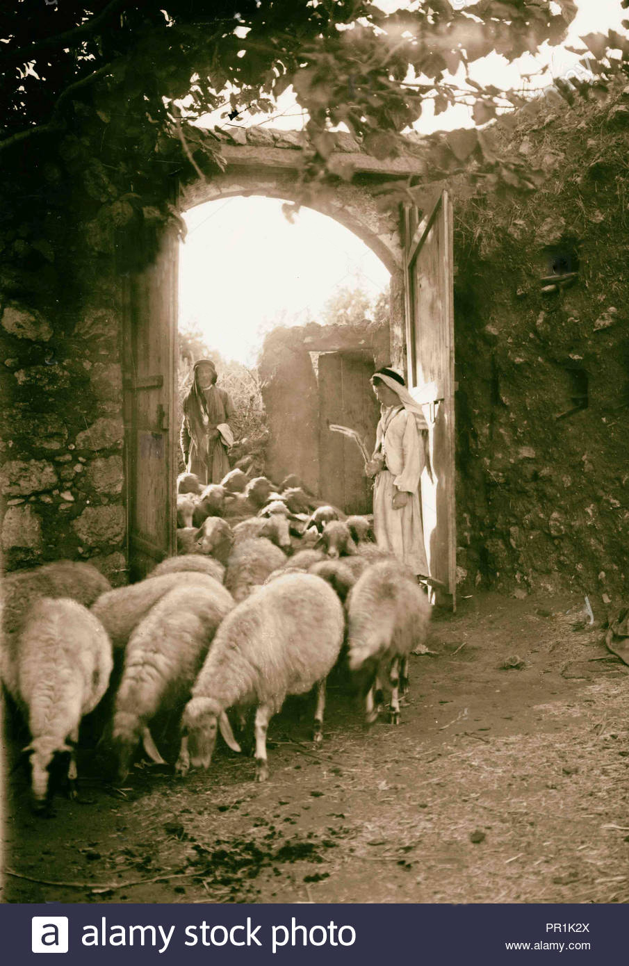 In biblical times, the sheep were made to pass under a shepherd's rod as he counted them; every tenth animal was then set aside as a tithe to the Lord (Leviticus 27:32).