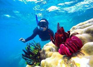 Wisata pulau bawah laut pulau legundi