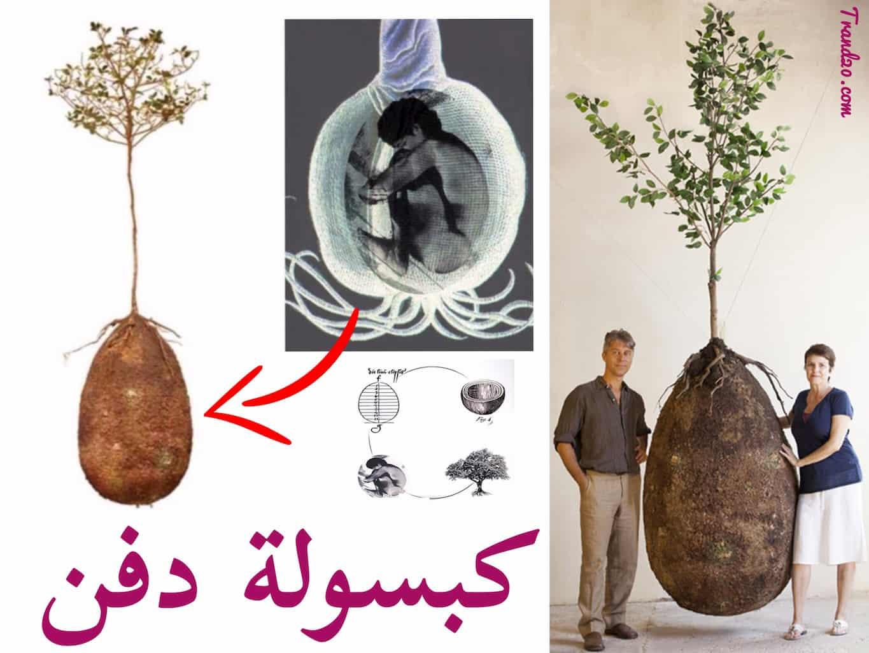 تعرف على كبسولة الدفن التي تحول جسم الانسان إلى شجرة ..