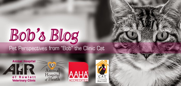 Bob's Blog - Animal Hospital of Rowlett
