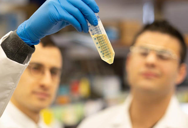 هل بلازما النقاهة ستستخدم علاجًا لفيروس كورونا المستجد؟