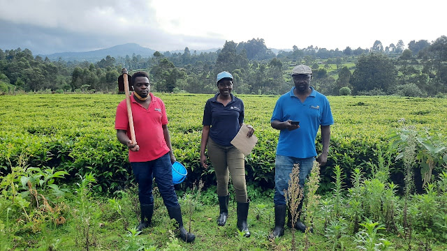 Three research assistants stand in a field in Nandi County with various farming and scientific tools