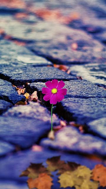 Flower Wallpaper Galaxy Note 7
