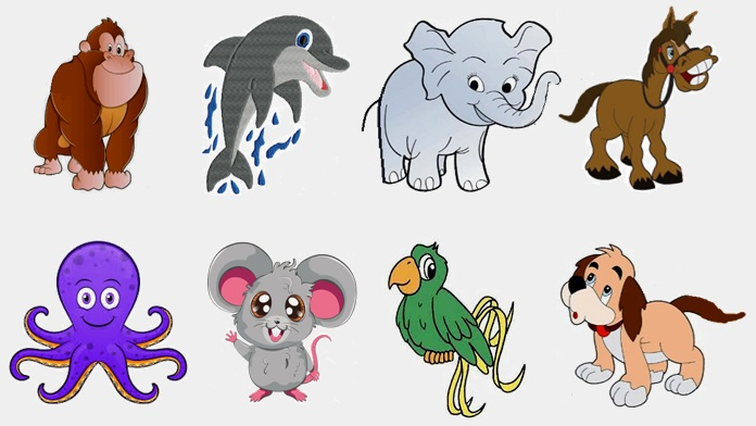 Otto animali più intelligenti del mondo