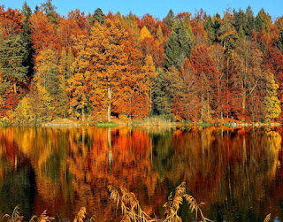 fall foliage by a lake