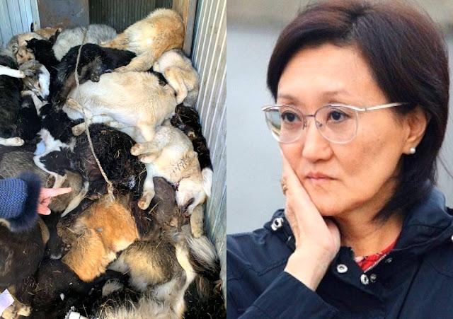 """""""Полный контейнер трупов"""". В якутском приюте разом убили около 100 животных"""