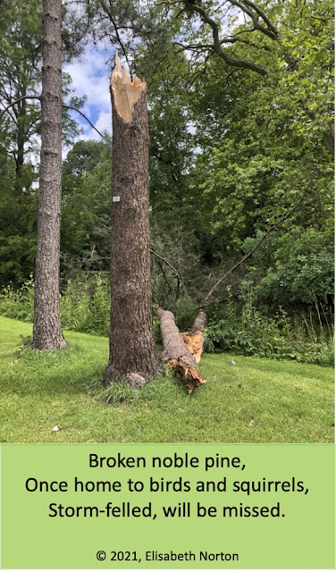 Picture of a tree trunk, with the broken top lying on the ground. Poem entitled Storm-felled Pine, copyright 2021 Elisabeth Norton: Broken noble pine, Once home to birds and squirrels, Storm-felled, will be missed.
