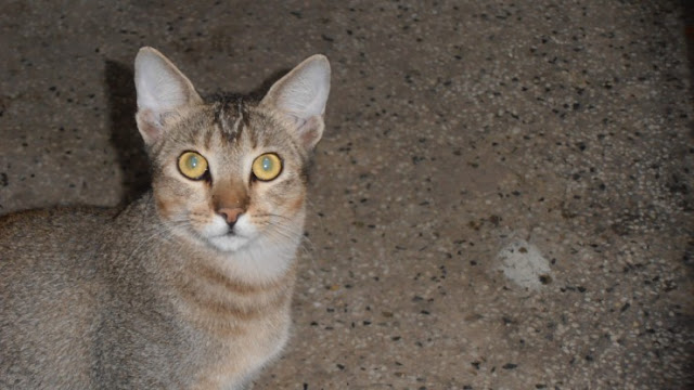 Cute cat with big eyes