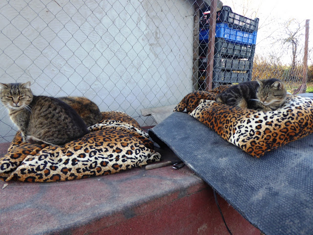 Siófoki állatmenhely macskák
